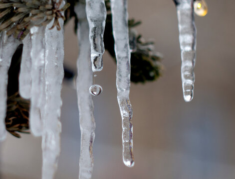 spring drops, melting icicles