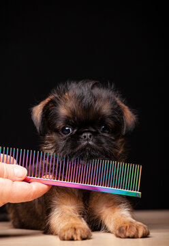 image of dog hairbrush hand dark background