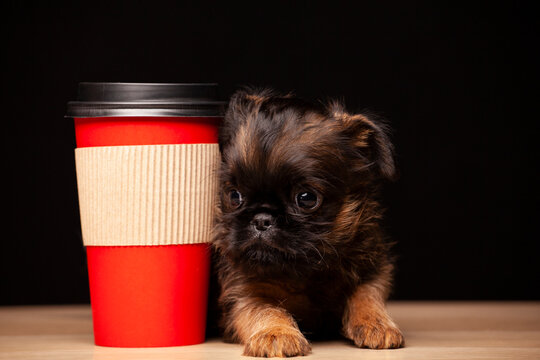 image of dog paper cup dark background