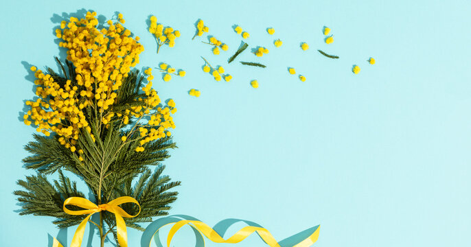 Spring mimosa branches with a yellow ribbon flat lay on blue background