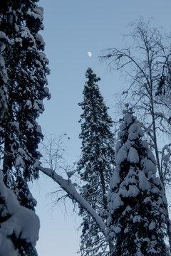 Nature Reserve of Russia, Arkhangelsk region Golubino.