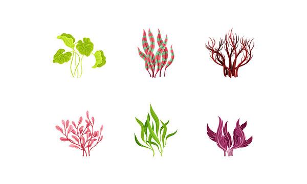 Underwater Seaweeds or Algae Growing on the Ocean Bottom Vector Set