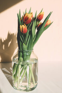 Close-up of a bouquet of spring red-yellow tulips in a glass vase on the table. Bright sunlight, harsh shadows. Vertical orientation. Gifts, floristry.