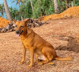 Brązowy dziki pies na tle palm i nieba.