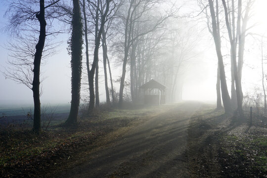 Misty morning in the forest. A rural road on a foggy morning. In the distance a little shelter.  There are trees on the left. An open space with sun-rays on the right