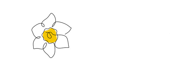 Obraz Daffodil flower in yellow color continuous line drawing. Blossoming Narcissus in spring isolated on white background. Garden flower with minimalist design in hand drawn style. Vector illustration - fototapety do salonu