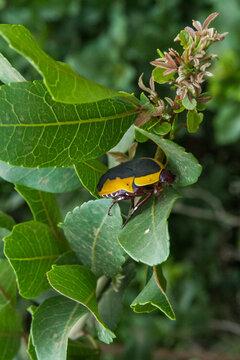 Closeup of African beetle