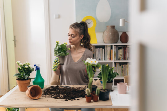 woman planting houseplants in her room