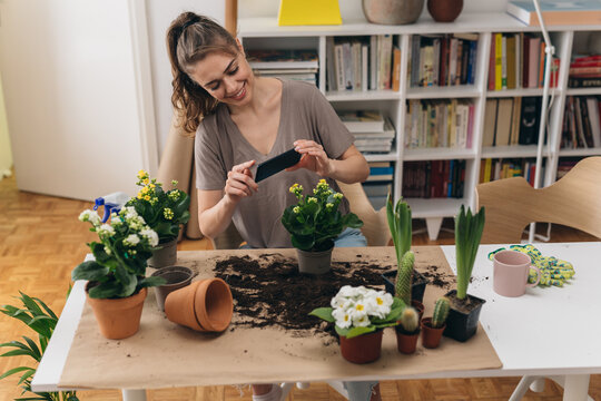 woman planting houseplants in her room. she takes the picture with her mobile phone for her blog