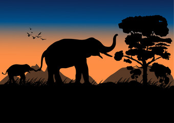 silhouette image Black elephant walking at the forest with mountain and sunset background Evening light vector Illustration