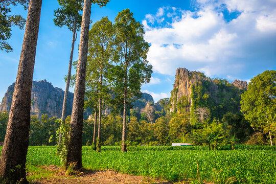 Corn Farm in the Village at Noen Maprang (Phitsanulok, Thailand)