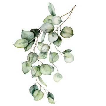 Watercolor card of eucalyptus branches, seeds and leaves. Hand painted silver dollar eucalyptus bouquet isolated on white background. Floral illustration for design, print, fabric or background.