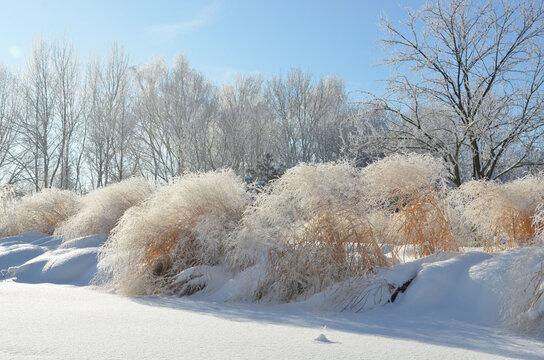 Unberührte Schneelandschaft im Park mit Raureif