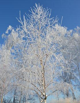 Unberührte Schneelandschaft im Park mit Raureif auf schwer hängenden Zweigen