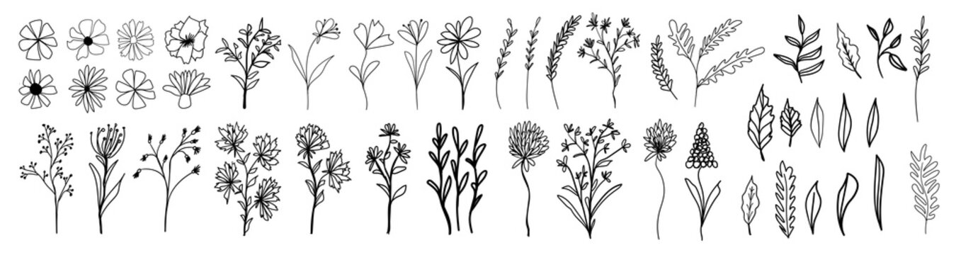 Big collection with branches, flowers and herbs with leaves. Black ink silhouettes isolated on white background. Set of hand drawn vector decorative elements for your design.
