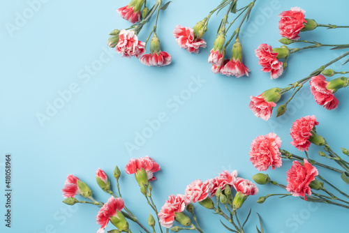 Concept of Mother's day holiday greeting gift with carnation bouquet on bright blue table background