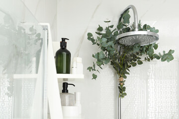 Wall Mural - Branches with green eucalyptus leaves in shower