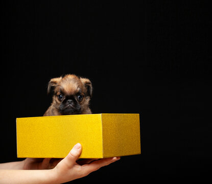 image of dog box hand dark background