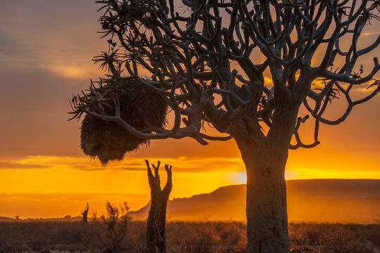 bright desert morning