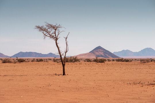 Namib desert landscape