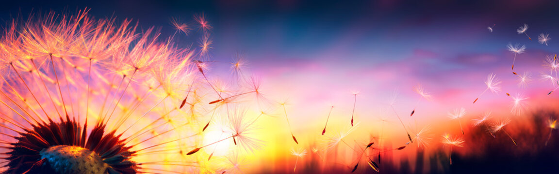 Defocused Dandelion With Flying Seeds At Sunset - Freedom In Nature Concept