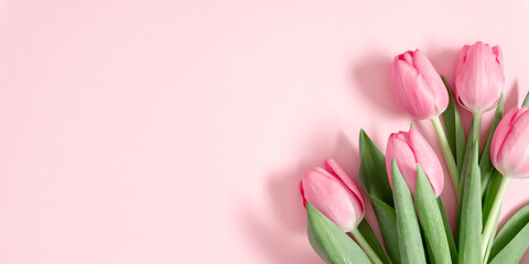 Fototapeta Beautiful pink tulips on pastel pink background. Concept Women's Day, March 8. 8th march. Spring background. Flat lay, top view, copy space obraz