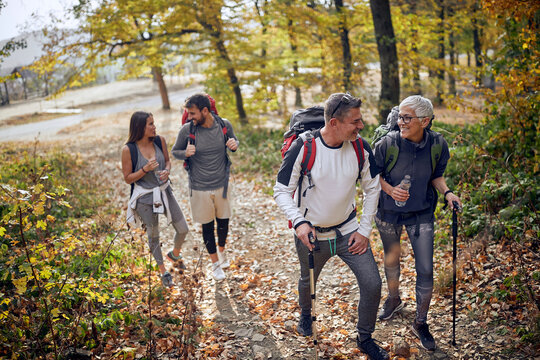 Group of hikers walking in forest
