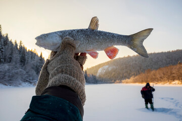 Landscape fishing on snow covered frozen lake, hand holding up caught fish, close up