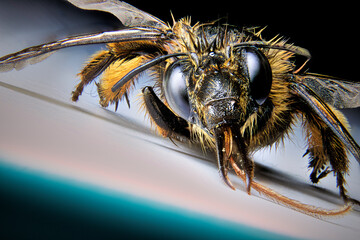 close up of a bee