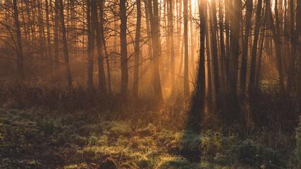Promienie słońca pośród drzew o poranku