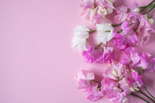 Pink flowers sweet peas on pink paper for congratulations.