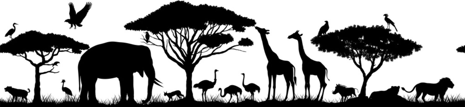 Vector horizontal seamless tropical african savannah with lions, elephant, girrafe, vulture, heron, hyena, common warthog,  common warthog, grey parrot, African ostrich and crowned crane