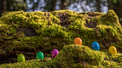 Easter eggs on the grass. Six colorful eggs on the moss.