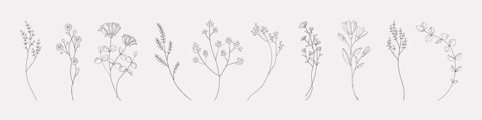Botanical drawing. Minimal plant logo, meadow greenery, leaf and blooming flower abstract sketch element collection, linear rustic branch. Vector hand drawn wedding invitation bouquet decoration set