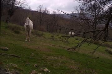 koń zwierze biały trawa zieleń drzewa