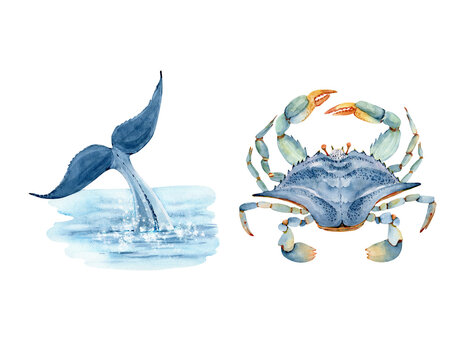 set of watercolor illustrations in marine style whale tail in the sea and blue crab. hand painted on white background