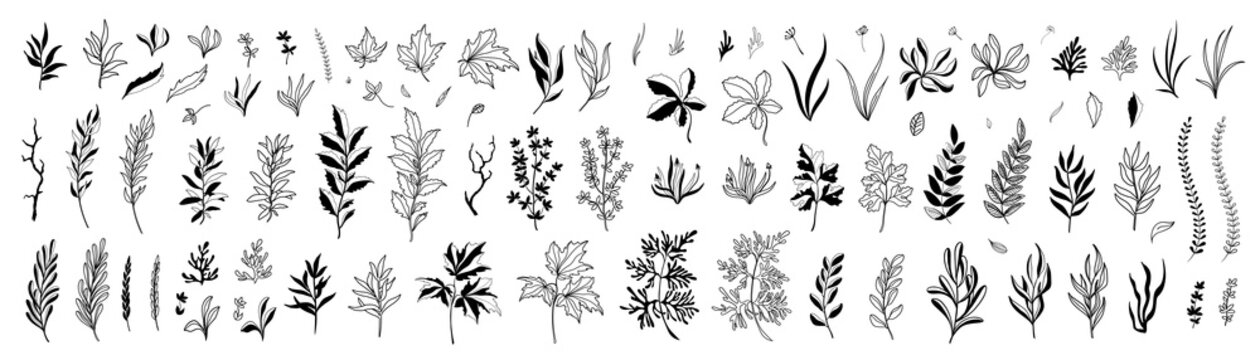 Set of hand drawn plants, leaves, flowers. Silhouettes of natural elements for seasonal backgrounds, templates, wallpaper, cards, banners. Modern stylish design. Doodle style. Vector icons.