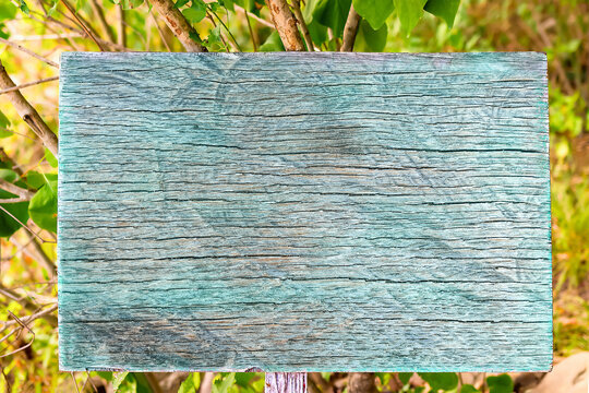 Close-up of signboard with old blue faded wooden texture in forest against background of green foliage and trees in summer. Backdrop for advertising and text with copy space. Mockup for design