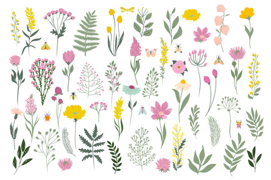 Collection of meadow flowers and leaves. Botanic spring collection. Editable vector illustration.