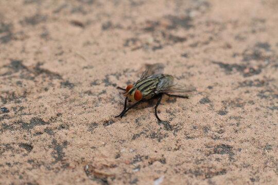 Close up fly on brick floor