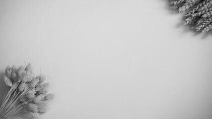 Obraz Tło białe z akcentem roślinnym B&W - fototapety do salonu
