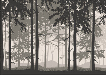 Forest background, silhouettes of trees. Magical misty landscape. Illustration.