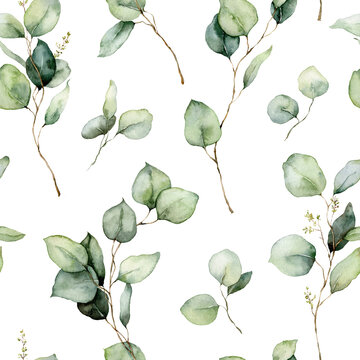 Watercolor seamless pattern of eucalyptus branches, seeds and leaves. Hand painted tropical plants isolated on white background. Floral illustration for design, print, fabric or background.