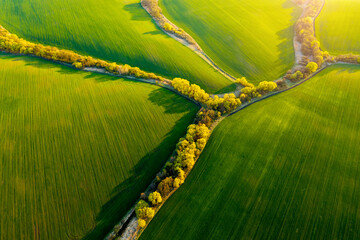 Wall Mural - Abstraction agricultural area and green wavy fields in sunny day. Aerial photography, top view drone shot.