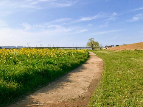 春の川辺の散歩道