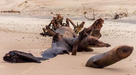 Fototapeta Kłoda brzeg morze plaża piasek obraz