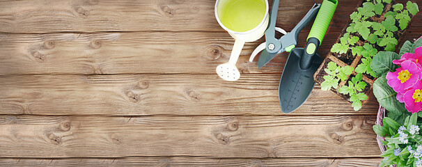 gardening and horticulture banner with copy space. seedling, watering can and gardening tools on wooden background. Garden and floristics border.