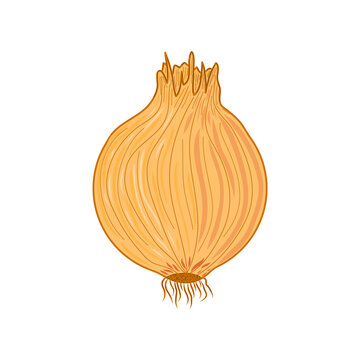 Yellow onion illustration. Idea for decors, logo, icon, gifts, ornaments, celebrations, invitation, greeting, autumn holidays, cooking and kitchen themes. Ready-made artwork. Isolated vector.