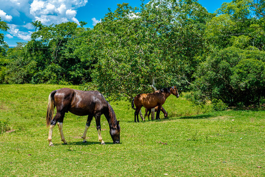 Horse, mare and foal grazing on sunny day