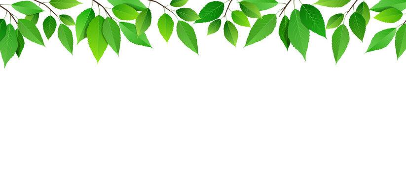 葉っぱの背景 ベクター素材